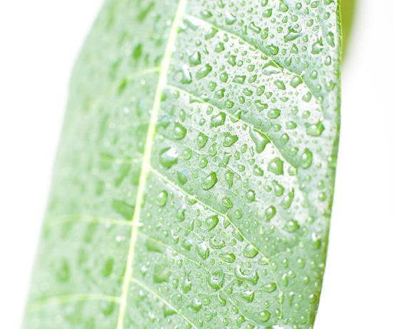 観葉植物おしゃれで育てやすい種類【初心者&花粉症持ち】